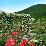 La Tacita Rose Garden