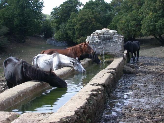 http://www.latorrettabandb.com/bb/wp-content/uploads/2016/01/sabina-horses-667x500.jpg